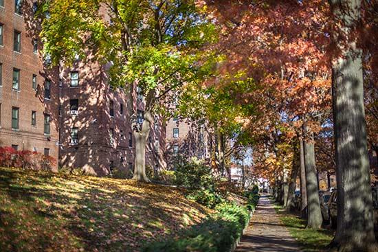 Tree-Lined Sidewalks Around Vernon Manor Section II