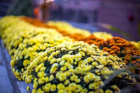 Flower Beds
